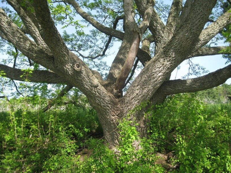 树风景速写作业